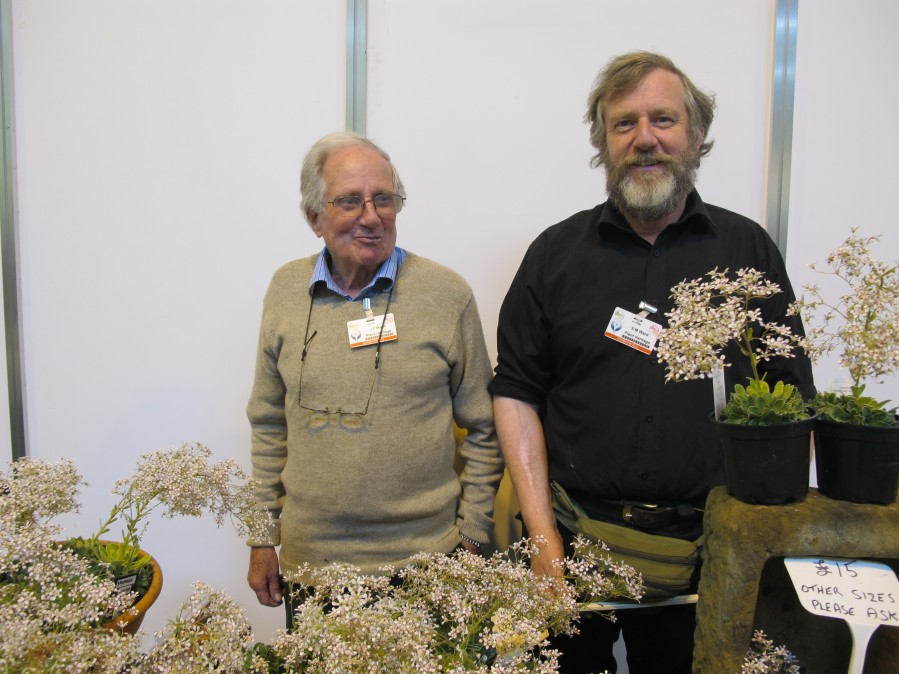 National Plant Collections H olders of Rhodohypoxis & x Rhodoxis  Messrs Ward