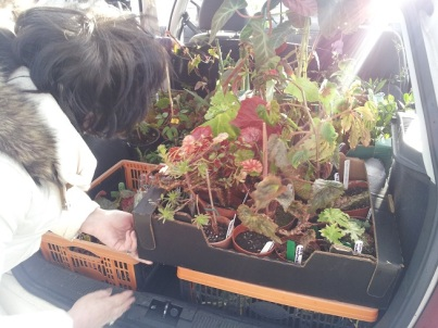 Car boot full of plants