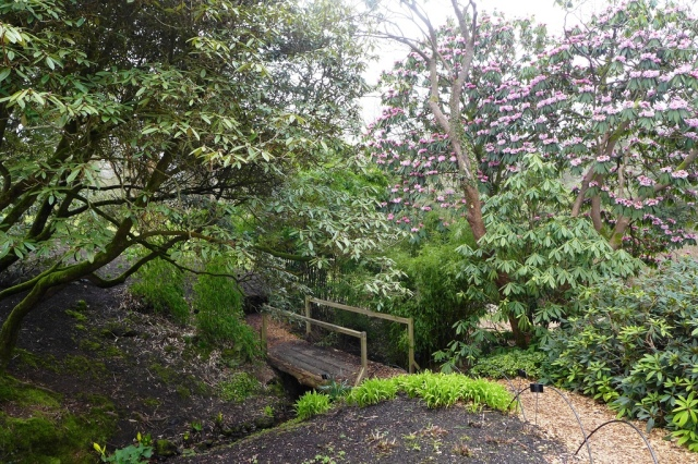 Rhododendrons at Wakehurst Place