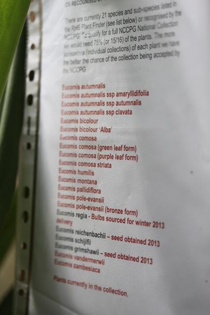 List of plants