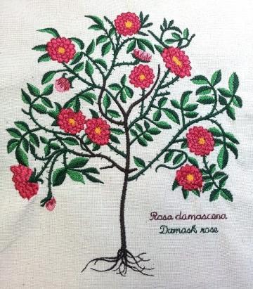 Rosa damascena embroidery