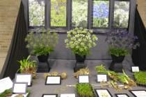 Hoyland Plant Centre - educational display