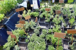 Aromaticulture - Collection of Thymus