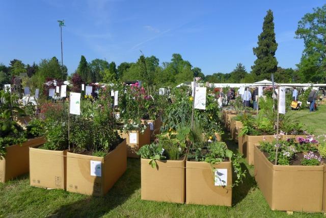 Plantes et Culture - diversité (4)
