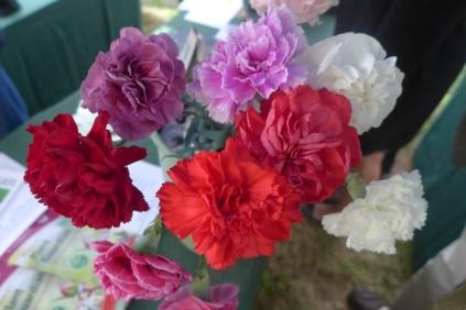 Perpetual Carnations