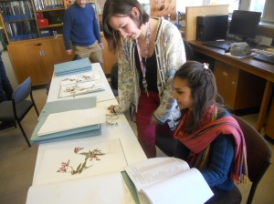 looking at a herbarium specimen
