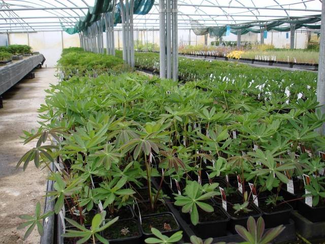 Sale plants ready for Malvern