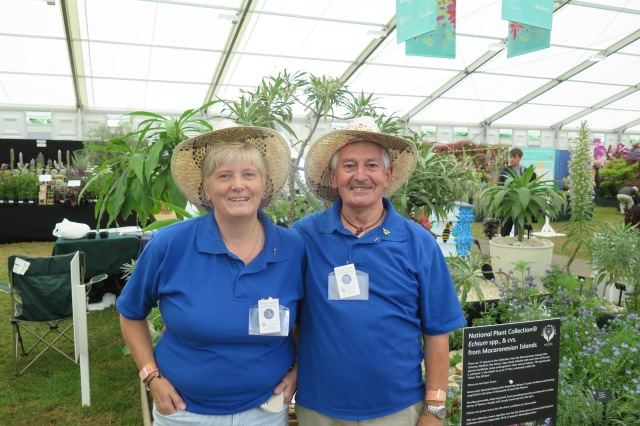 Linda Heywood's (Echium World) new National Plant Collection of Echium spp., & cvs., from the Macaronesian Islands