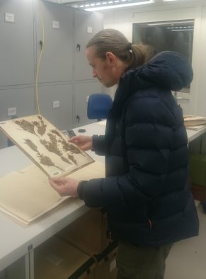 Robbie with the original Joseph Banks specimen (BM000947188) in the Herbarium at the Natural History Museum © Robbie Blackhall-Miles Courtesy of the Trustees of the Natural History Museum, London